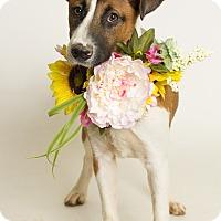 Adopt A Pet :: Kenya - Baton Rouge, LA