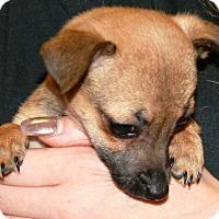 Adopt A Pet :: Poppy - Concord, CA