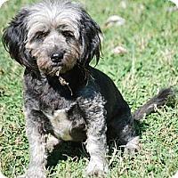 Adopt A Pet :: Britches - Providence, RI