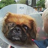 Adopt A Pet :: Murray - Virginia Beach, VA