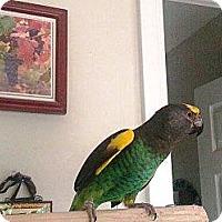 Adopt A Pet :: Tamone - Lenexa, KS