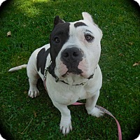 Adopt A Pet :: Moolan - Cypress, CA
