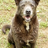Adopt A Pet :: Velvet - Rossville, TN