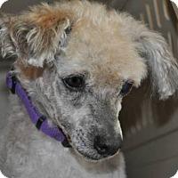 Adopt A Pet :: SABIAN - Elk River, MN