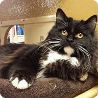 Adopt A Pet :: Pei Mei - Irvine, CA