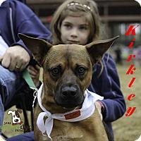 Adopt A Pet :: Kirkley - Alpharetta, GA
