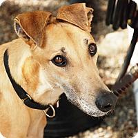 Adopt A Pet :: Oshkosh - Ware, MA