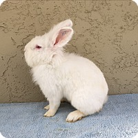 Adopt A Pet :: Landis boy - Bonita, CA