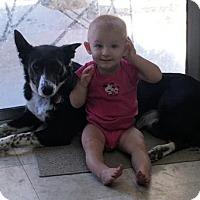 Adopt A Pet :: Maggie - Castaic, CA