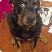Adopt A Pet :: Asia- BIG MUSH! - Oak Ridge, NJ