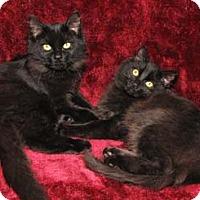 Adopt A Pet :: Lotus - Merrifield, VA