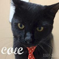 Adopt A Pet :: Cole - Hialeah, FL
