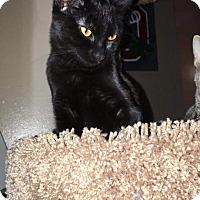 Adopt A Pet :: August - Columbus, OH
