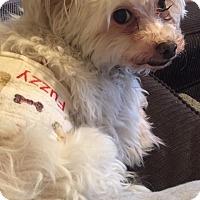 Adopt A Pet :: Fuzzy - Mount Gretna, PA