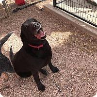 Adopt A Pet :: Piper - Douglas, WY