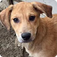Adopt A Pet :: Jamison - Southlake, TX