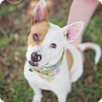 Adopt A Pet :: Lucile - Kingwood, TX
