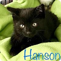 Adopt A Pet :: Hanson - Island Park, NY