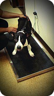 Terrier (Unknown Type, Medium) Mix Dog for adoption in Atlanta, Georgia - Legend (COURTESY POST)