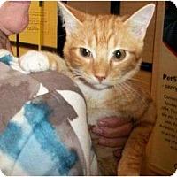 Adopt A Pet :: Ramsey - Reston, VA