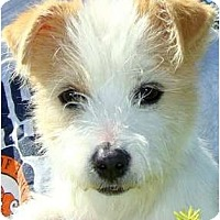 Adopt A Pet :: Gorgeous GEORGE - Hendersonville, TN
