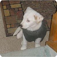 Adopt A Pet :: Thunder - Madison, WI