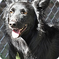 Adopt A Pet :: Felix - Valley Springs, CA
