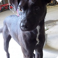 Adopt A Pet :: Kip - Chewelah, WA