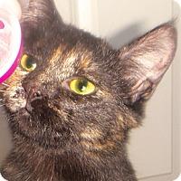 Adopt A Pet :: Lady Ayra - Calgary, AB