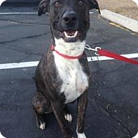 Adopt A Pet :: Odie - Scottsdale, AZ