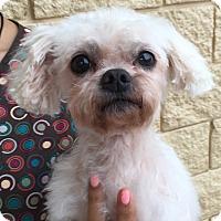 Adopt A Pet :: Socrates - Orlando, FL