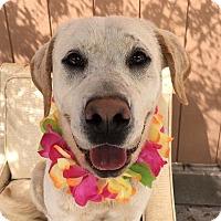 Adopt A Pet :: Logan - Canoga Park, CA
