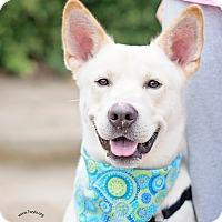 Adopt A Pet :: Ryder - Kingwood, TX