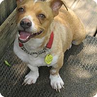 Adopt A Pet :: TRUVIE - Brookside, NJ