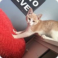 Adopt A Pet :: Cyrus - Madisonville, LA