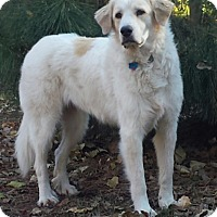 Adopt A Pet :: Dinah  *Medical Hold - Tulsa, OK