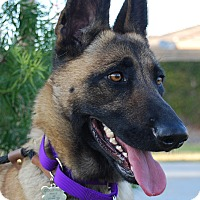 Adopt A Pet :: LILY - Glendale, CA