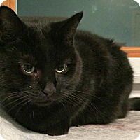 Adopt A Pet :: Missy - Oakville, ON