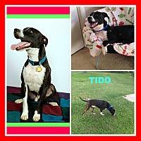 Adopt A Pet :: TIDO - Malvern, AR
