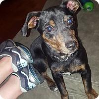 Adopt A Pet :: Yoshi - Jerseyville, IL
