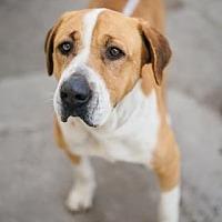 Adopt A Pet :: Jodie - Fresno, CA