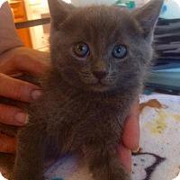 Adopt A Pet :: Vivienne - Los Angeles, CA