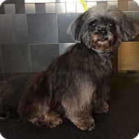 Adopt A Pet :: Esther Williams - McKinney, TX