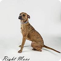 Adopt A Pet :: Honey aka Angel - North Myrtle Beach, SC