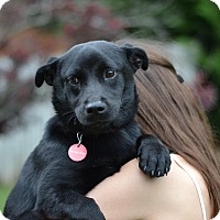 Adopt A Pet :: Shovel - Garden Litter - Acworth, GA
