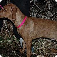 Adopt A Pet :: Kane - Harrisburgh, PA