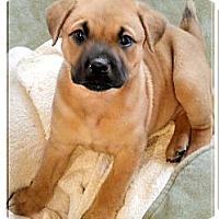 Adopt A Pet :: Sasori big girl - Sacramento, CA