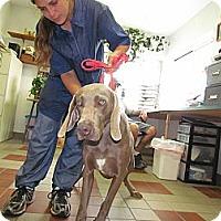 Adopt A Pet :: Ledge - Attica, NY