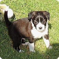 Adopt A Pet :: Lucas - La Habra Heights, CA