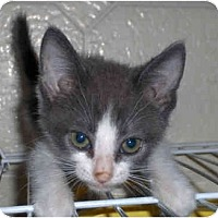 Adopt A Pet :: Binx - Richmond, VA